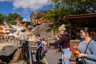 Zoo Miami Alivi
