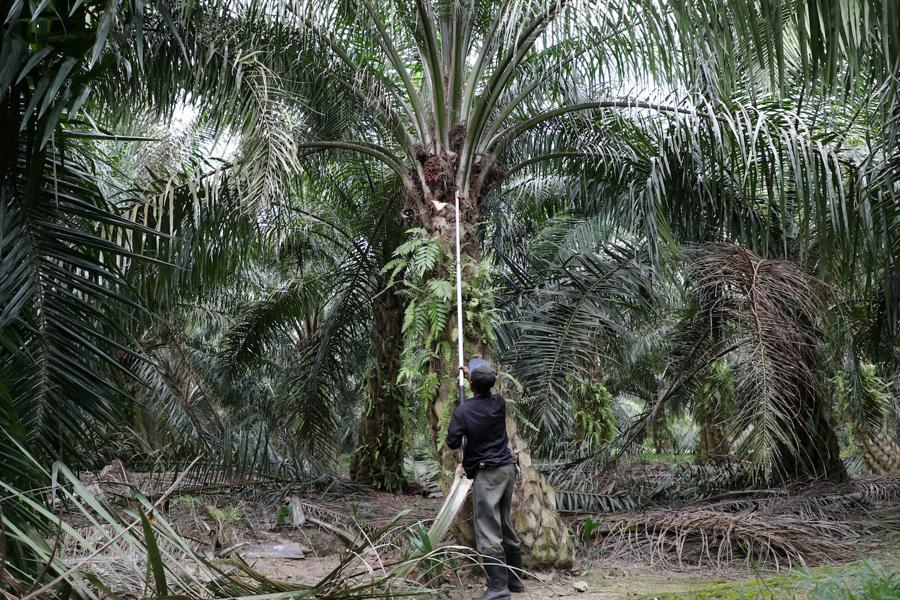 Malaysia's FGV plunge hit by US ban on its palm oil products