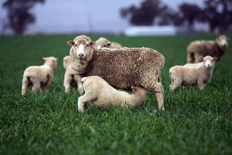 Australian farmers in $28 billion cry for help over China's tarif