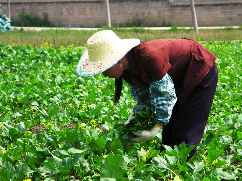 China to bolster financial, insurance support to agricultural areas