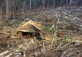China behind Amazon, global forest destruction, reports claim