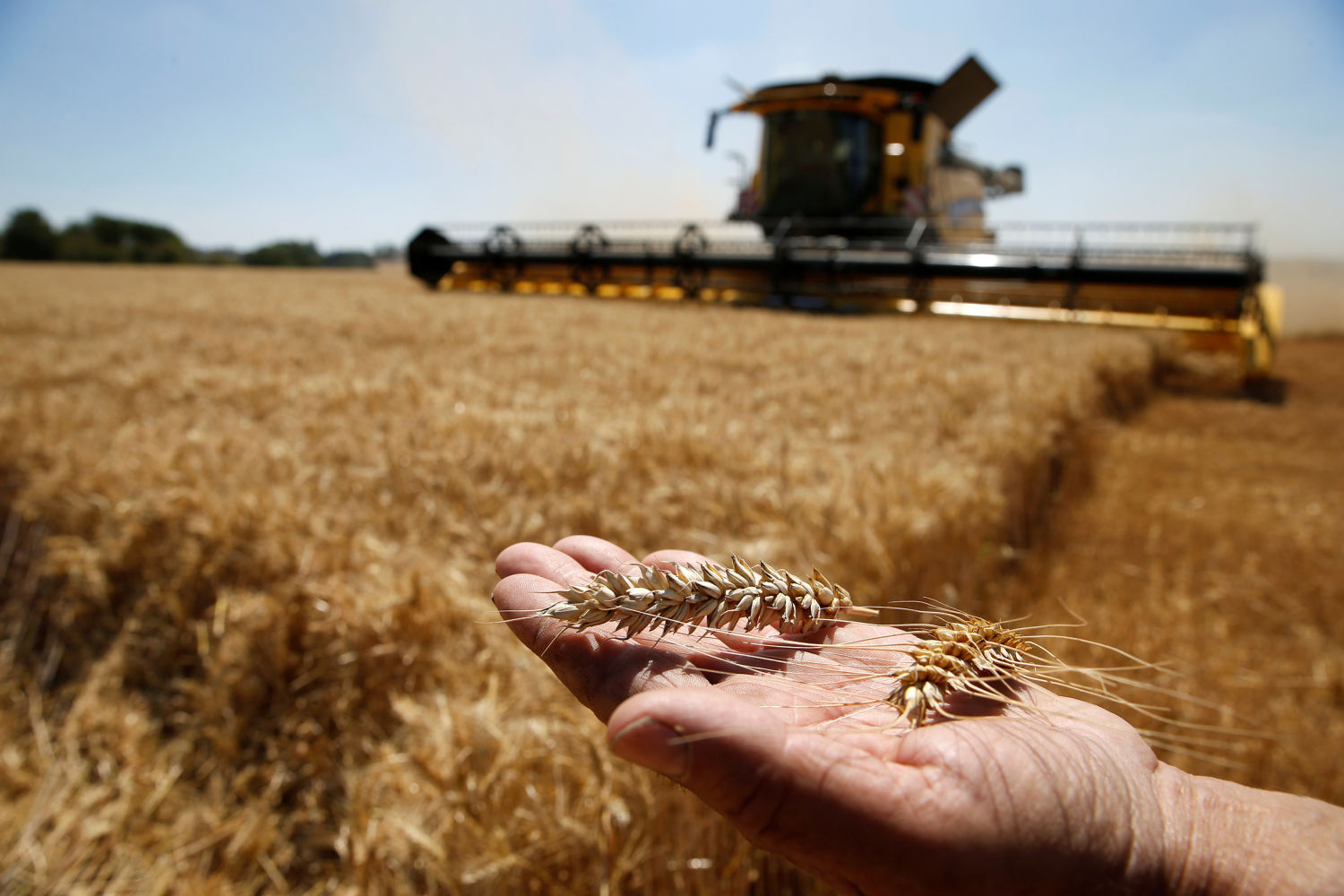 China advises France to export better quality wheat