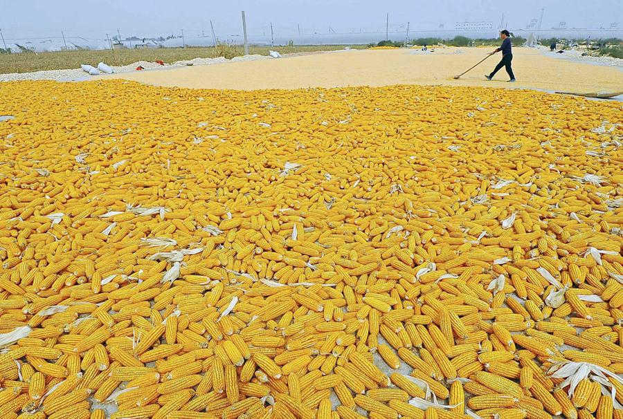 China vows to protect food security amid shocks to supplies