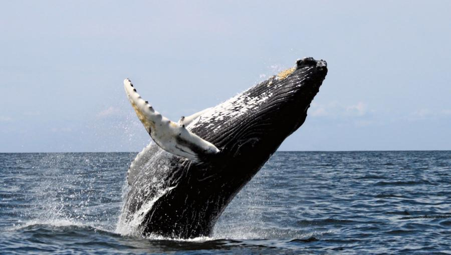 Bitcoin halving: Whales may tire of 'hodling'