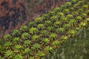 Activists accuse BlackRock of palm oil hypocrisy