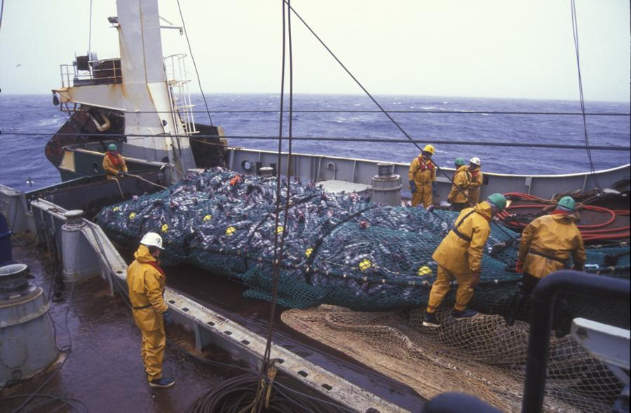 WTO fails to reach deadline to stop overfishing