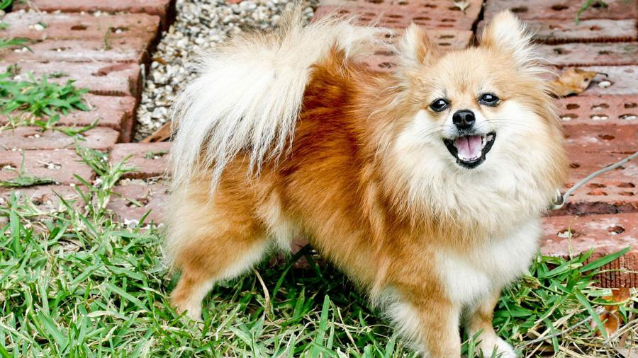 Low-level infection of dog sparks new concerns