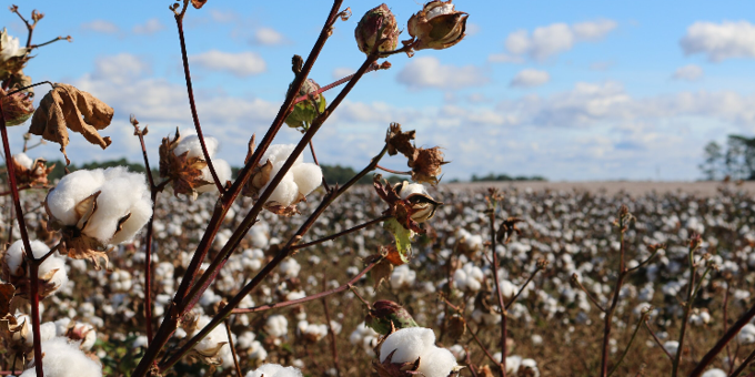 Farmwave Partners with USDA and Cotton Inc. for Artificial Intelligence in Cotton Spraying and Harvesting.