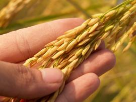 Agronomists Provide The Human Insights for Ag Analytics