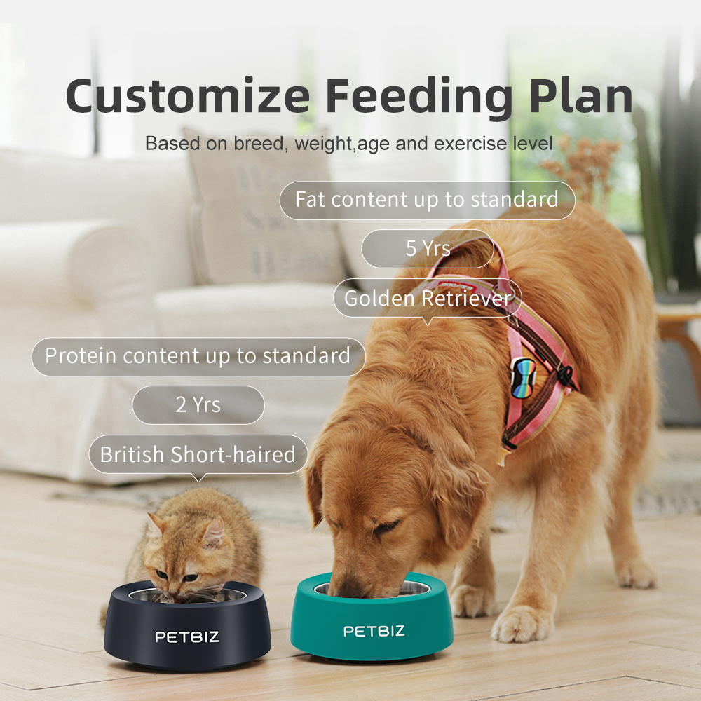 cat and dog eating from petbiz bowls