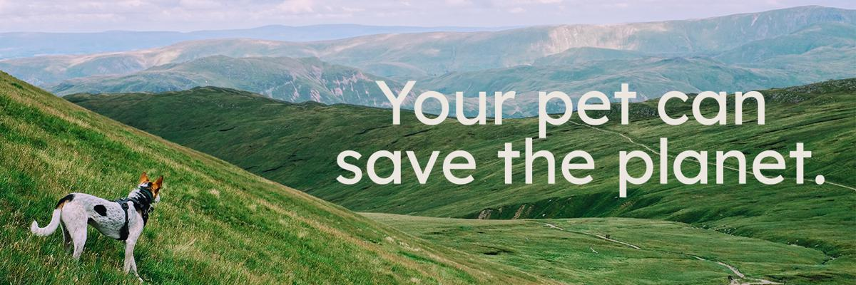 Your Pet can save the planet banner and a dog in the field