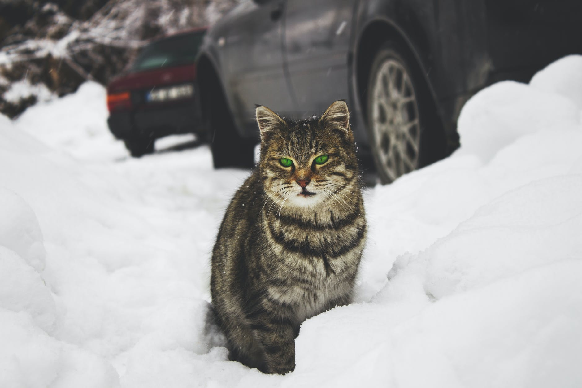 Cats In Danger During Winter