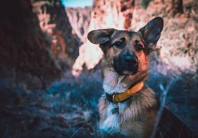 How to protect your pet from theft?