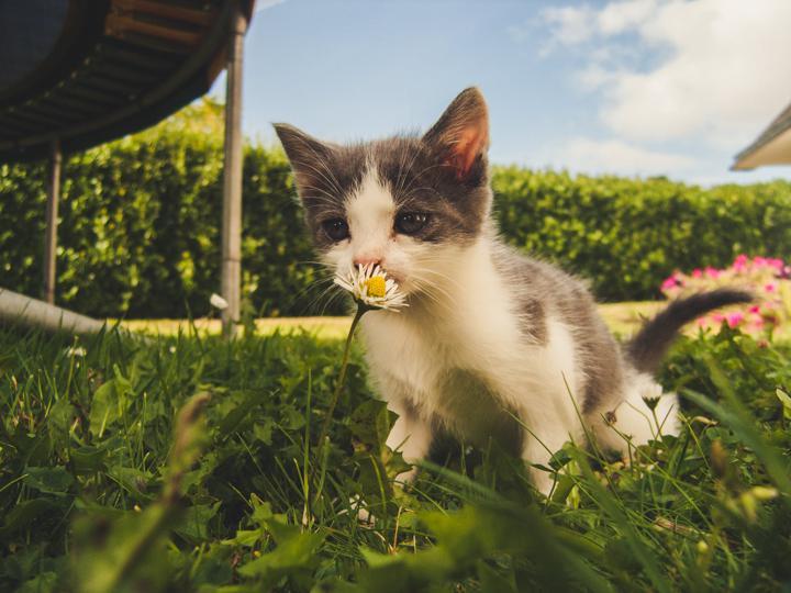 kitten sniffing flowers