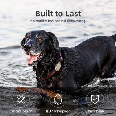 Black dog in the water wearing petbiz gps tracker