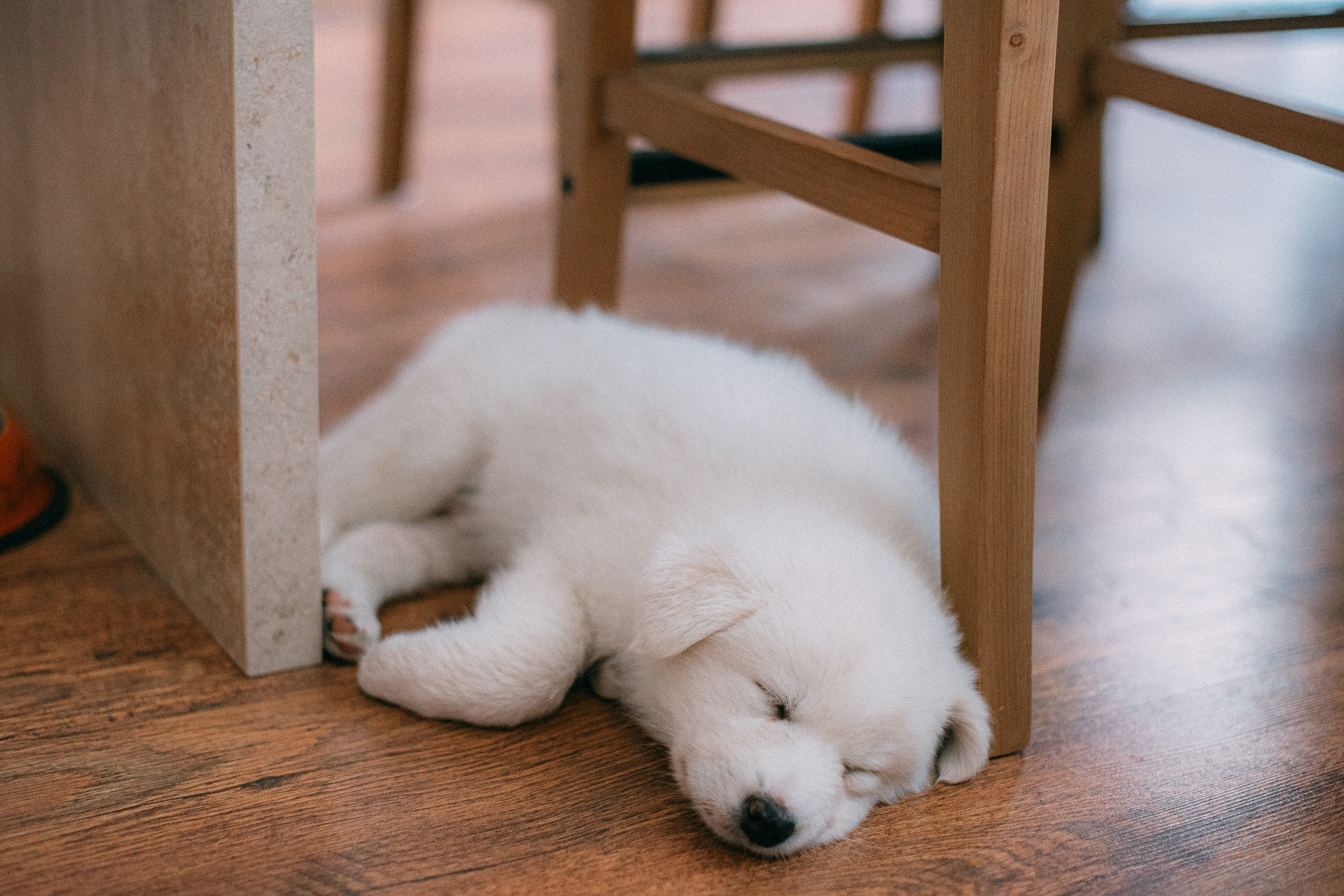 Giving your puppy the best start to life