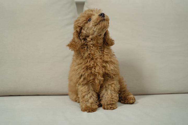 happy puppy on the sofa