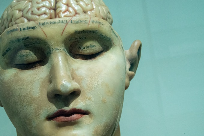 Investor Brain