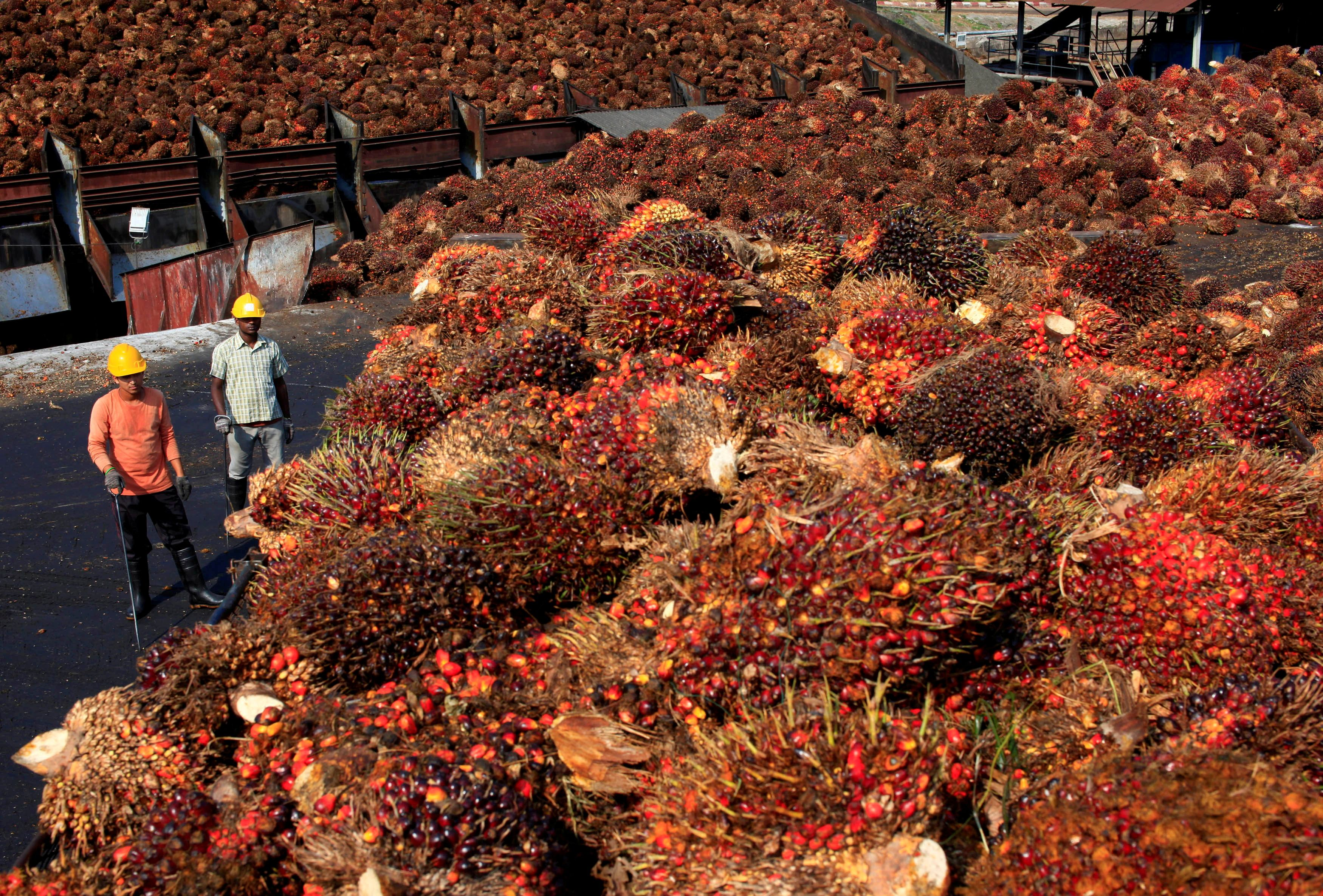 Malaysian palm giant workers mistreated, faces labour abuse - Fin