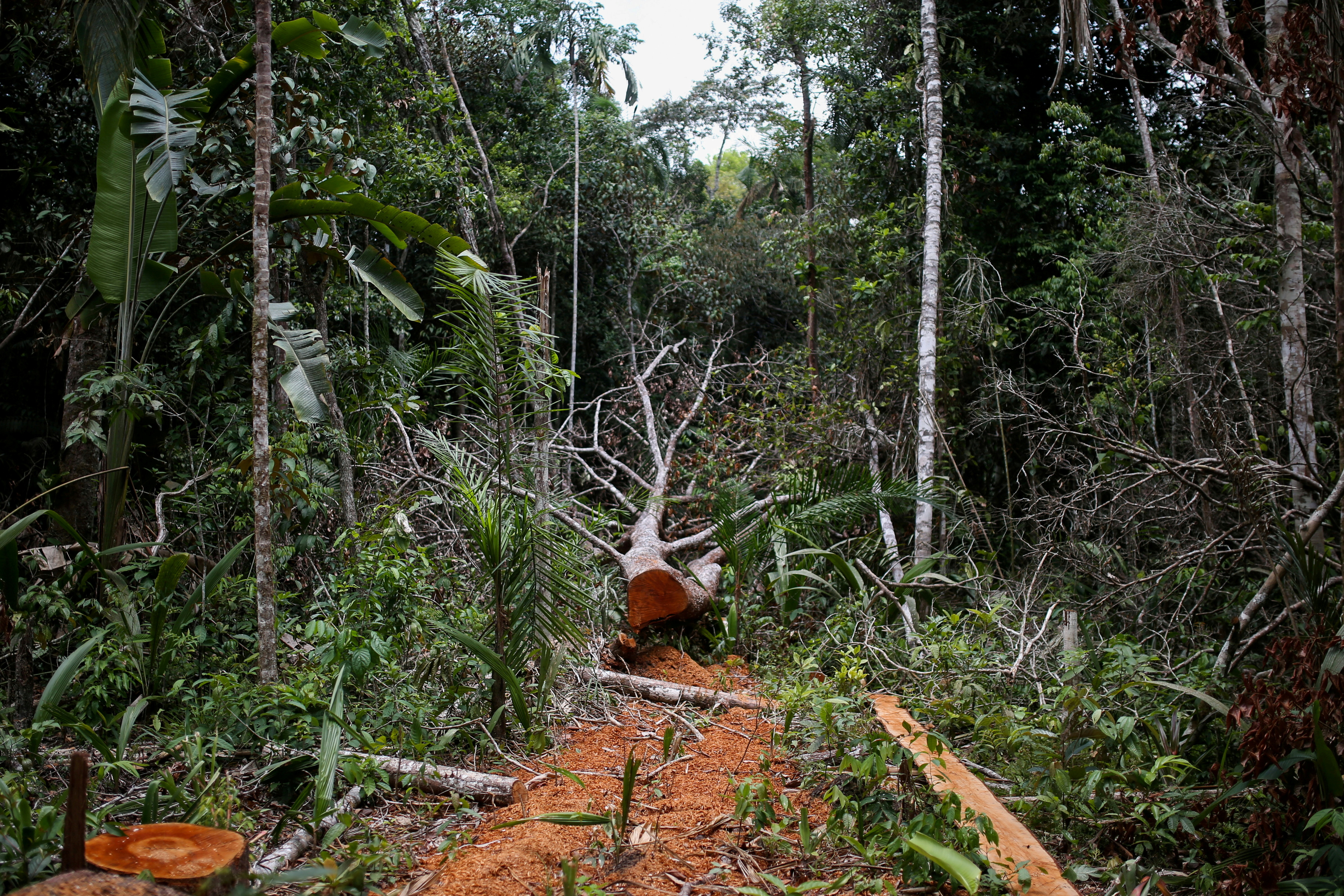 Some 30% of global tree species at risk of extinction - report