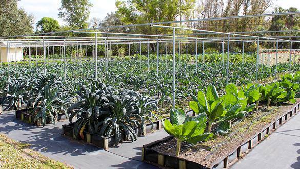farm fresh produce fort myers