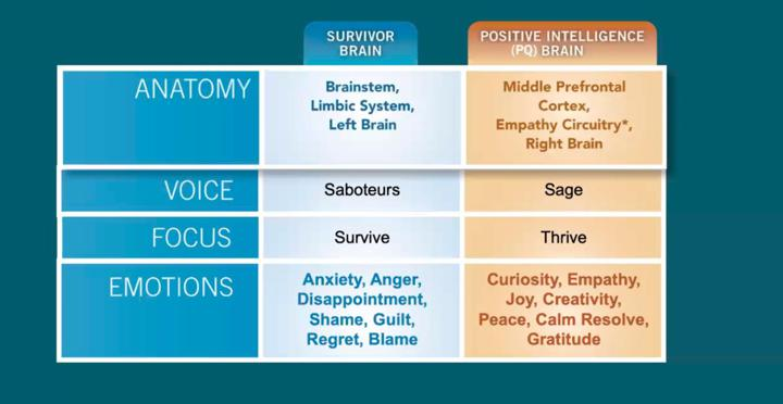 sage vs saboteur brain