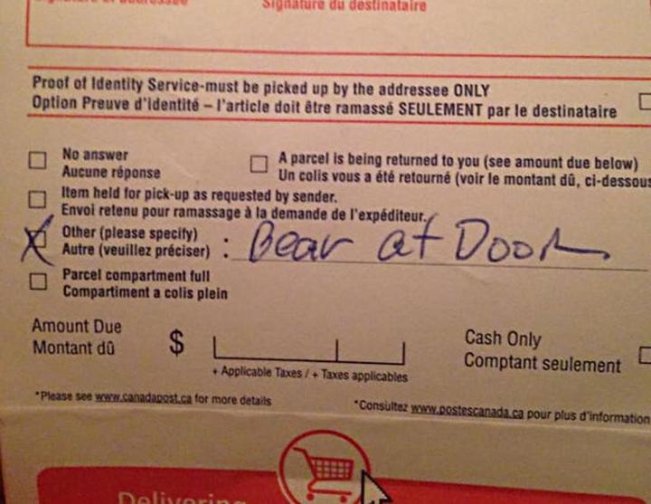 reason for shipping delay bear
