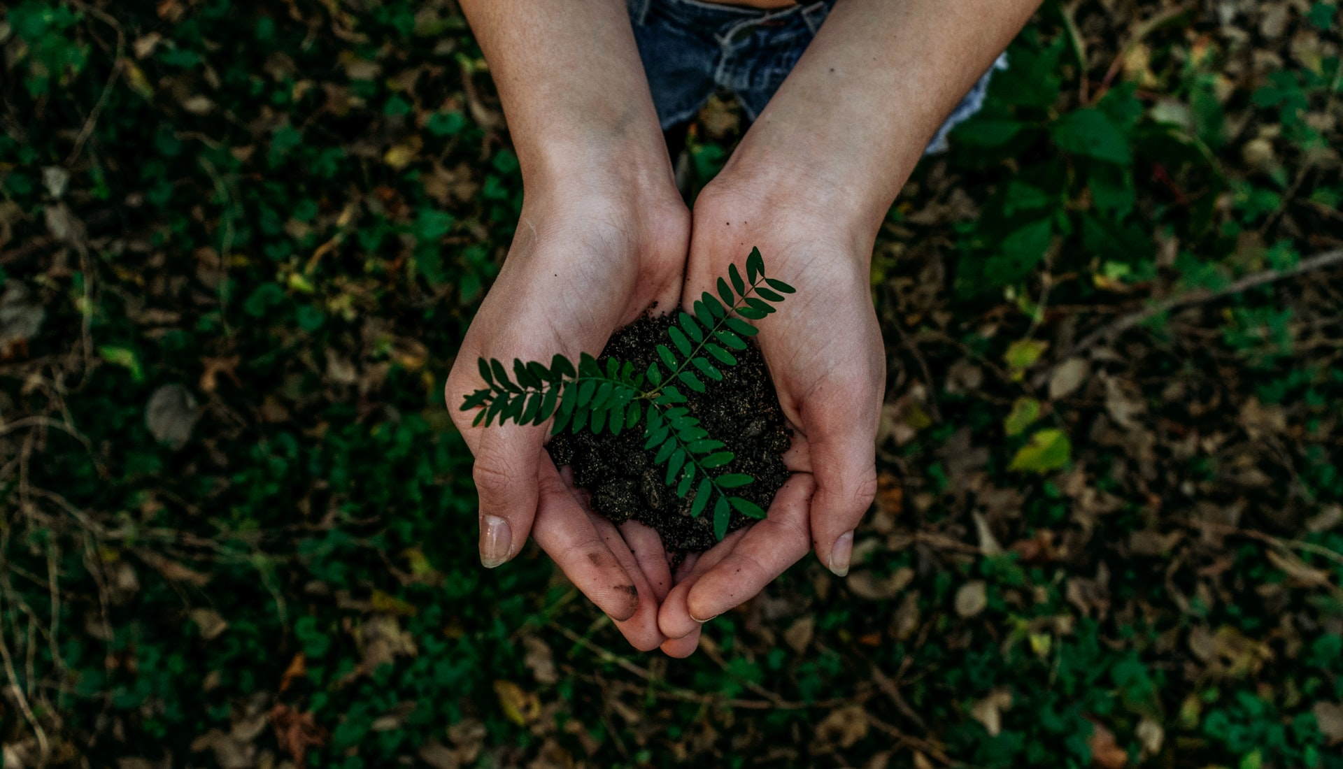 Sustainable Marketing: What It Is, Why It Matters, & How to Get It Right
